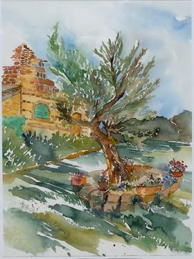 Olivenbaum in Montalto